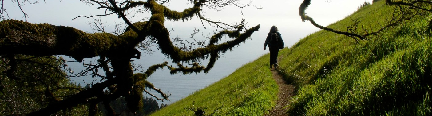 Mt Tam walk