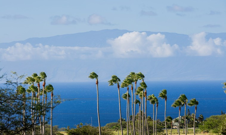 looking to Maui