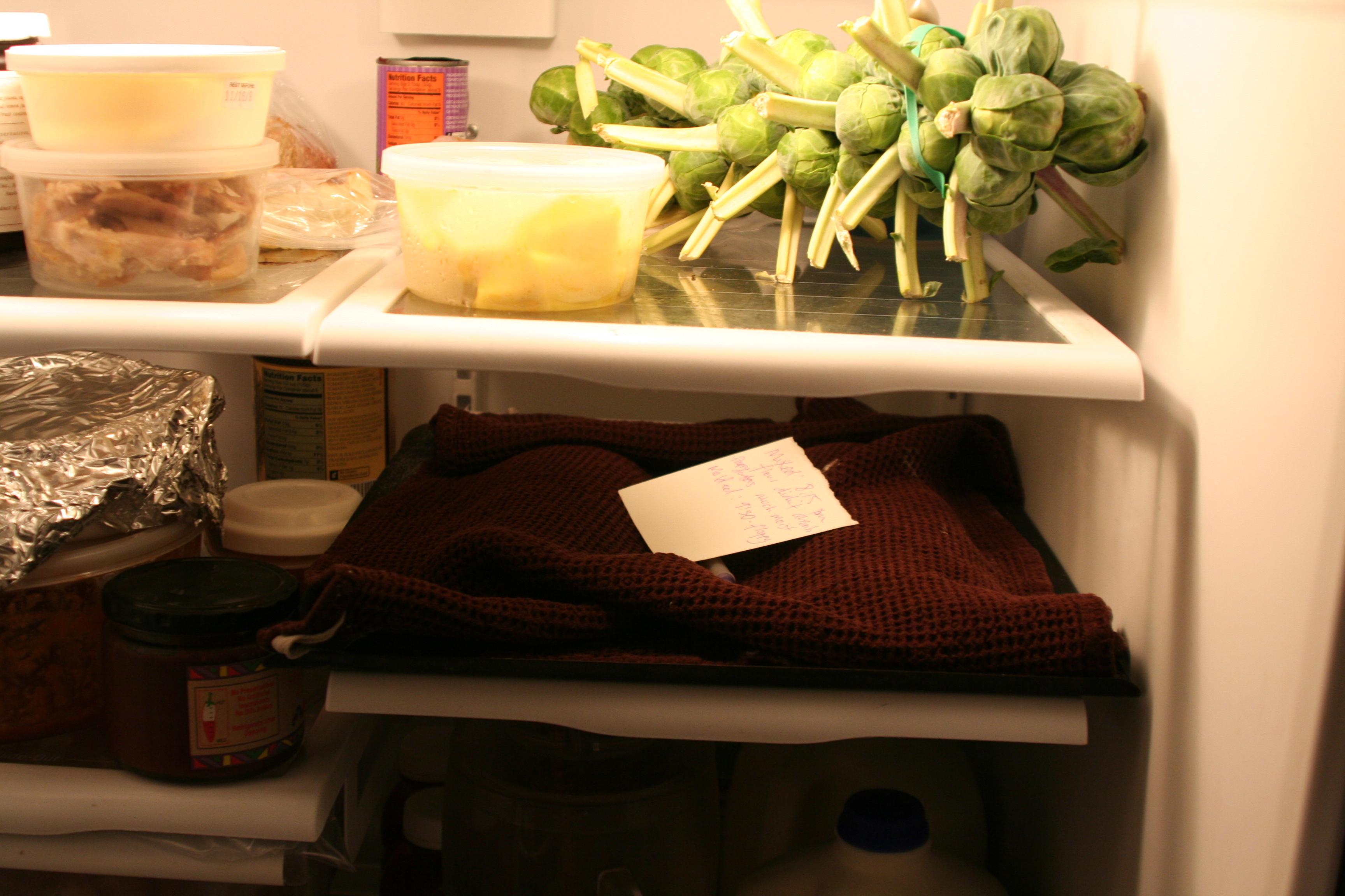 floppy in fridge