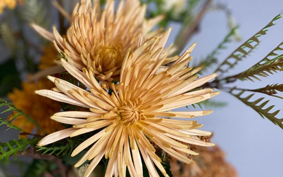 Chrysanthemum Workday