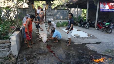 Schlachtung auf offener Straße