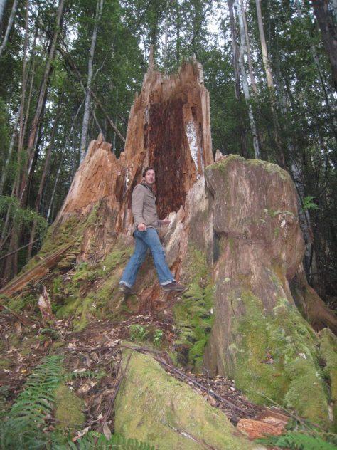 In Australiens Regenwald