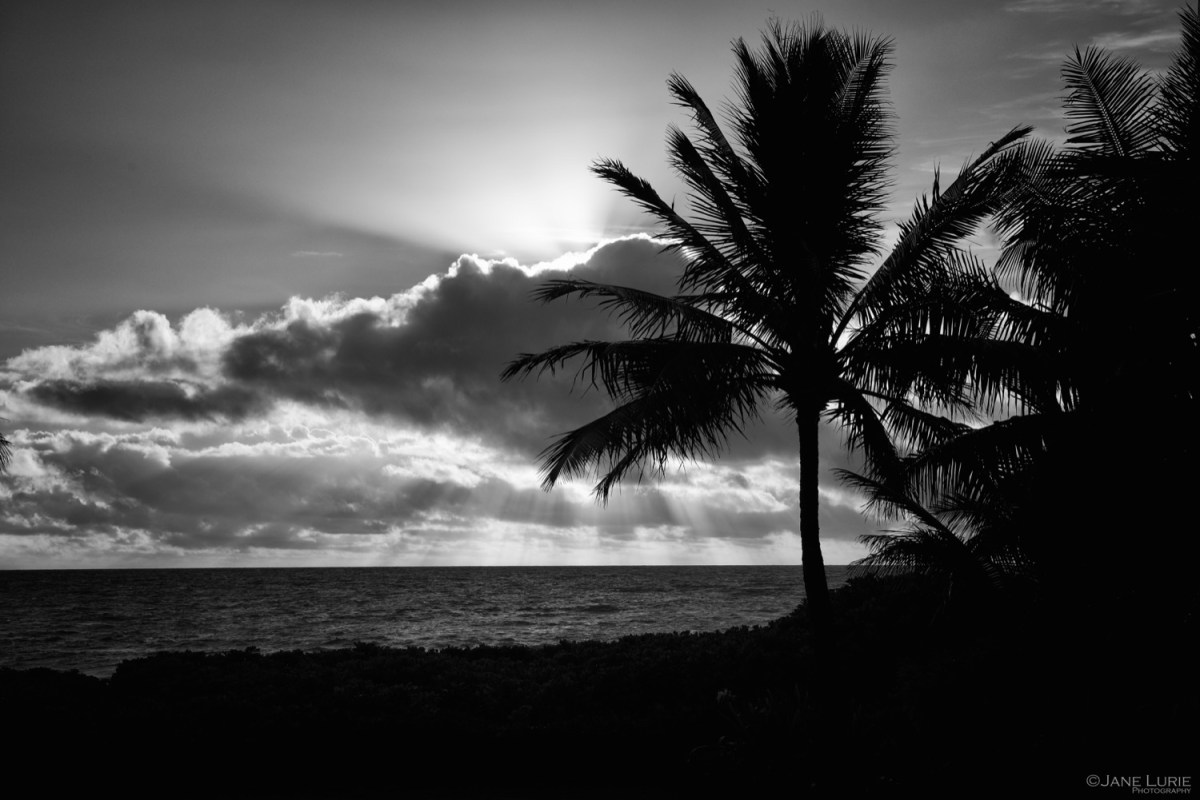 Light Seeking in Hawaii  Jane Lurie Photography