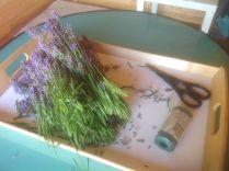 Cut Lavender