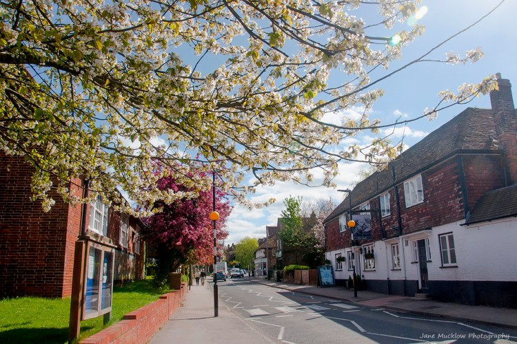 Photograph of Otford High Street with the white and pink cherry blossom in flower, by Jane Mucklow