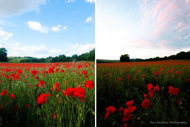 Montage of photographs of poppy fields for June in the Colours of Kent 2019 Calendar by Jane Mucklow Photography