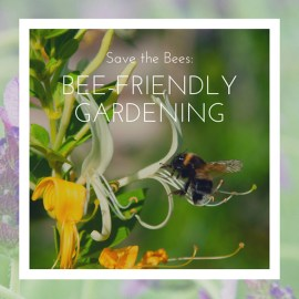 Save the Bees!  Bee friendly gardening…