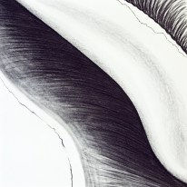 Shell Series, #5, charcoal, 24 x 24 inches