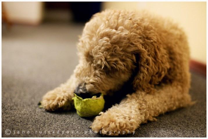 Molly eating ball