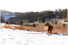 Horse in cold winter