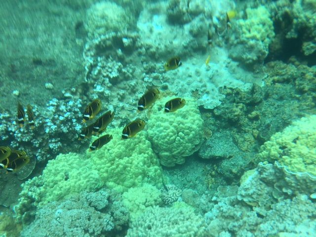 Tropical Fish and Corral Reef