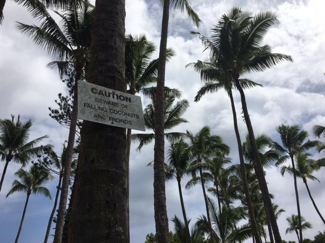 Palm trees on the Big Island, Hawaii