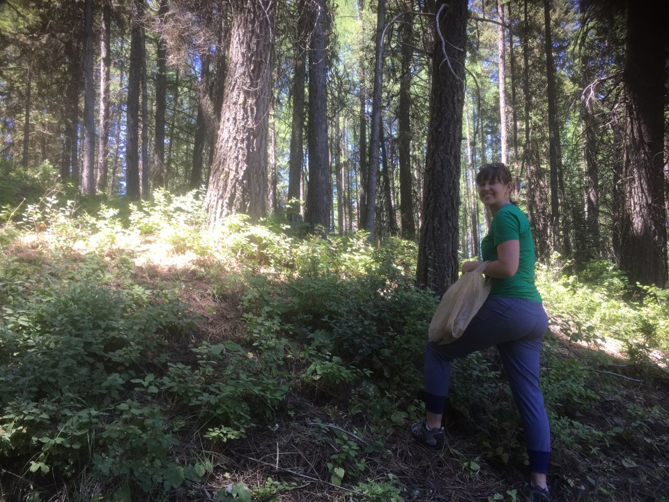 Huckleberry picking in Idaho, girl in woods, exploring your own backyard