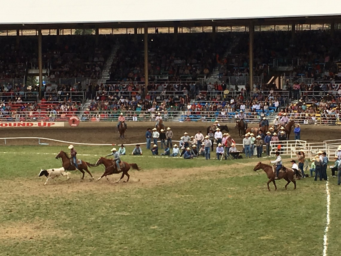 Steer wrestling at the Pendleton Round Up