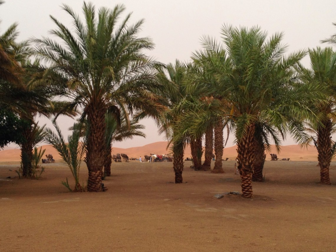 Sahara Desert in Morocco after a rare storm