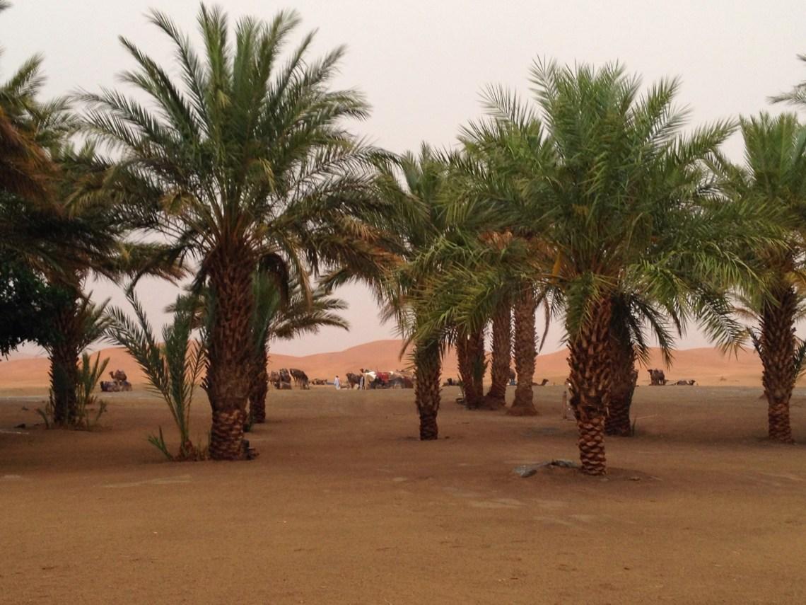 Sahara Desert in Morocco after a rare storm