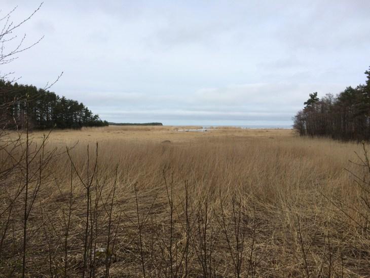 Baltic Sea in Lahemaa National Park