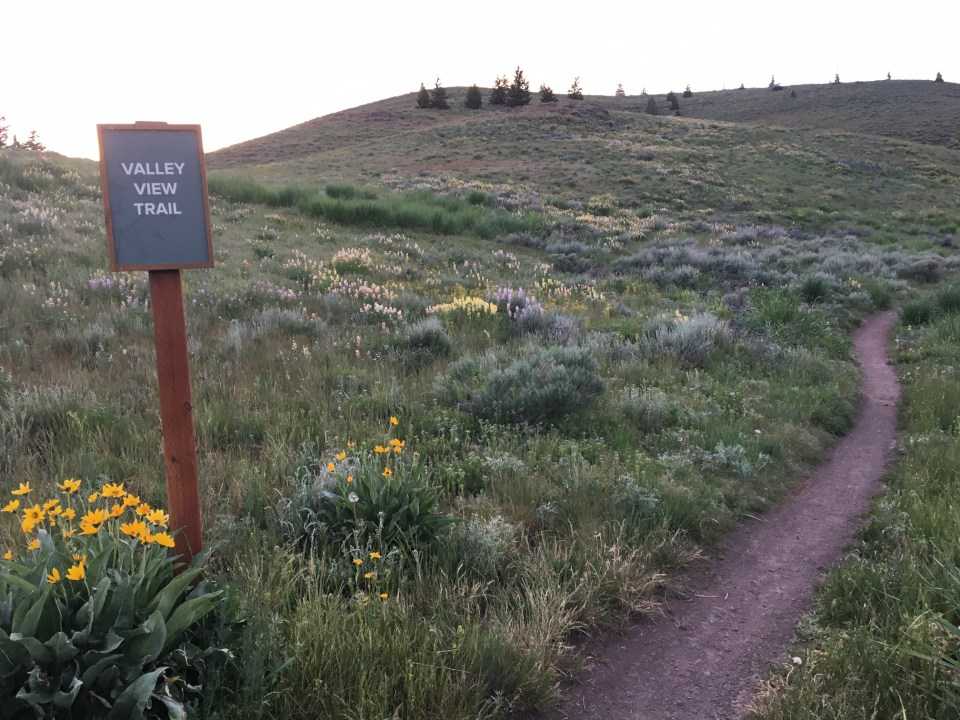 Hiking trail in Sun Valley, Idaho dusk wildflowers Valley View Trail