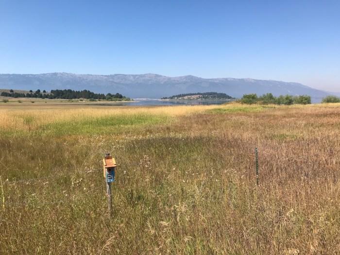 Lake Cascade State Park marsh with birdhouse