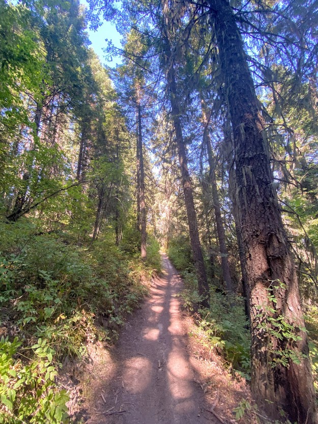 forest trail in Mary McCroskey State Park