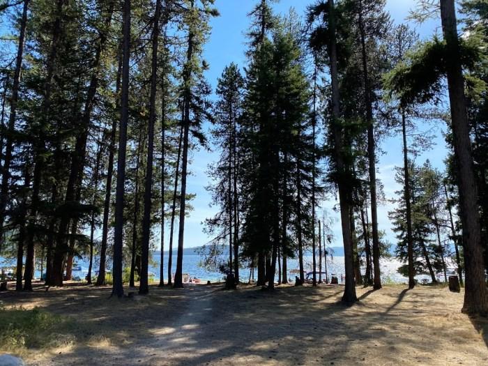 Pine trees at Priest Lake State Park.