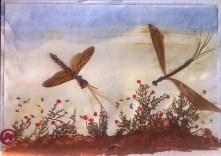 Insects: Crete