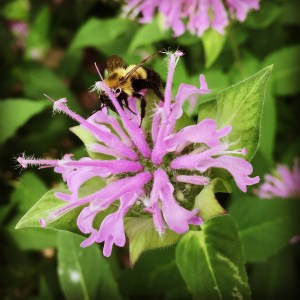 How to Stop feeling too busy - Bumblebee on Flower