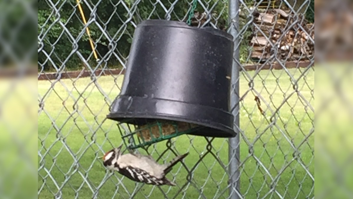 How to Keep House Sparrows Off Suet Feeders