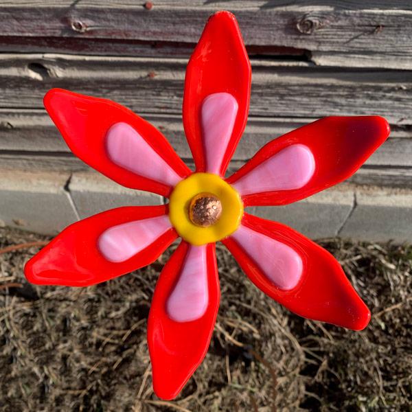 Garden Flower - Sunrise