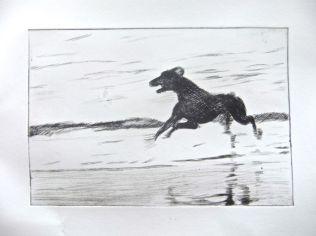 Black dog running 2