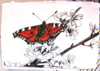 Butterfly on blackthorn blossom.
