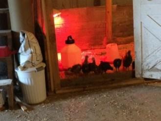 Chickens on Doorsill