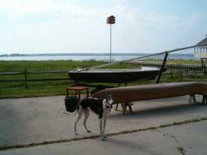 My final shot of Merlin, with the sailboat we gave away in the background. The canoe I kept -- hand made by Jon