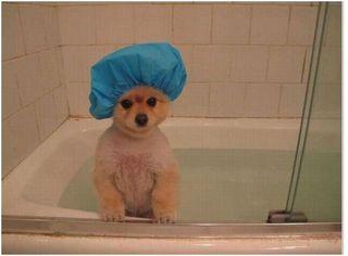 dog-in-tub