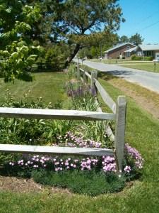 front yard Chincoteague