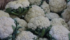 Cauliflowers were in season. Katha market.