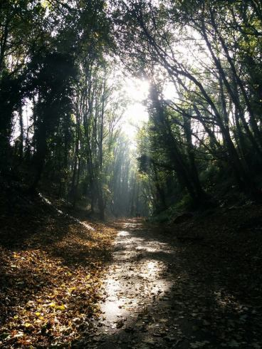 The haunting Rodwell Trail