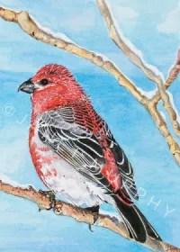 Pine Grosbeak Greeting Card watercolor by Janet Murphy.