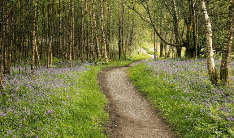 landscape, bluebells, Scotland, West Highland Way, Flora, trees, path