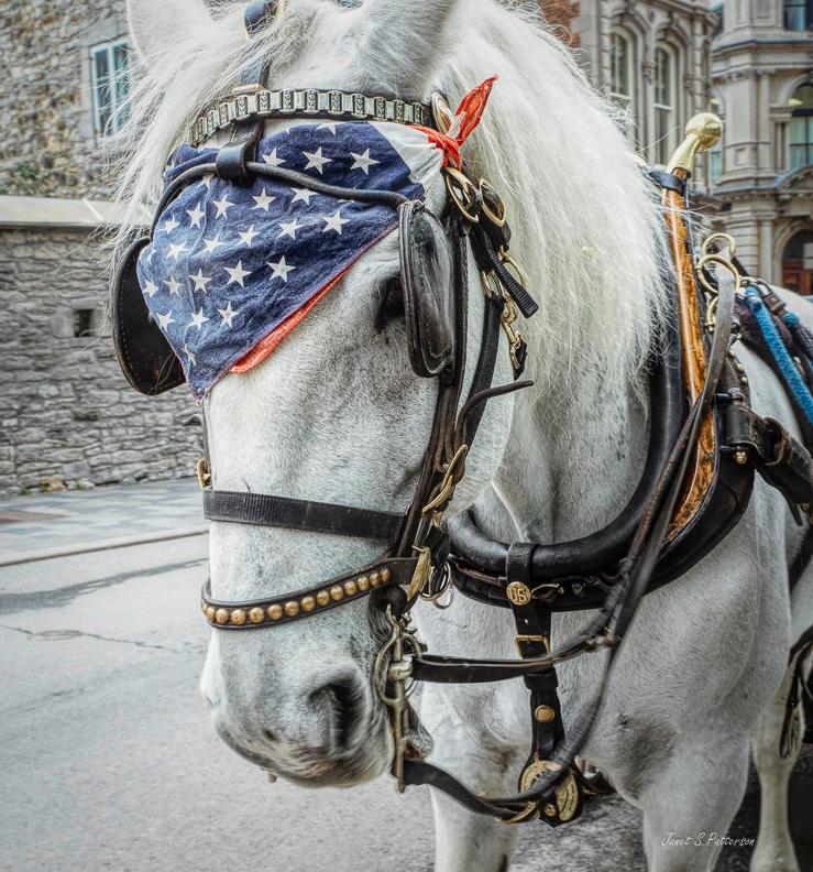 fauna, horse, Montreal, streetscape, Jake
