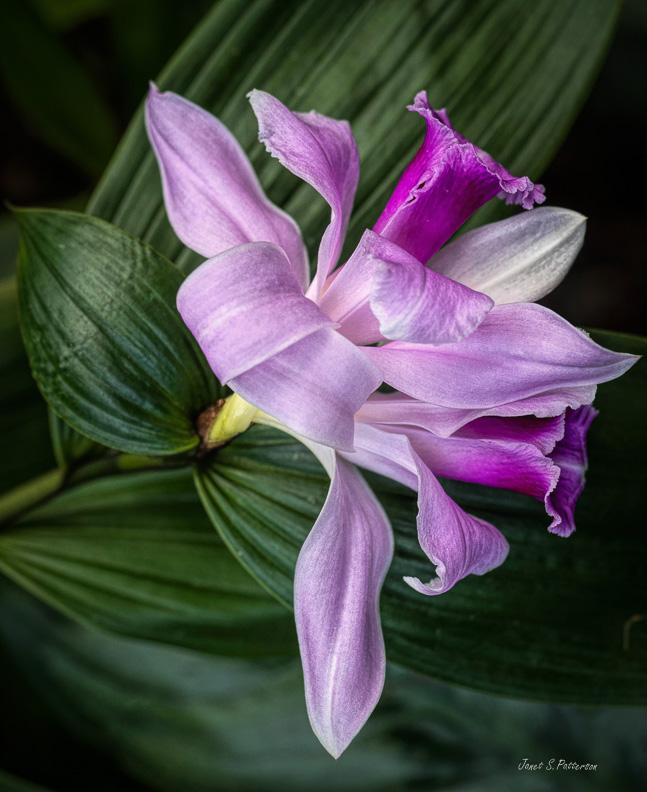 flora, pink, Montreal Botanical garden