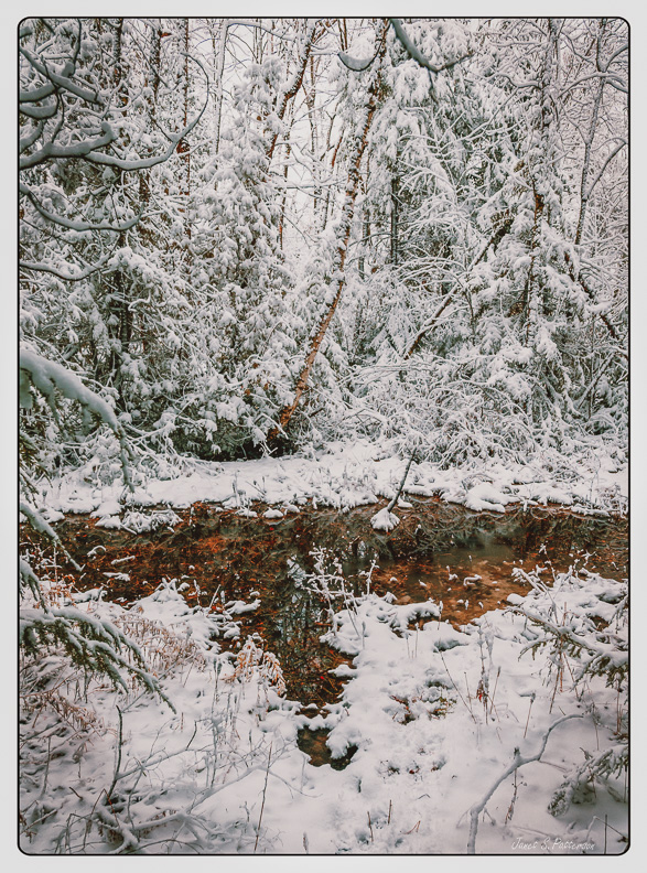 Winter, snow, trees, water, trails