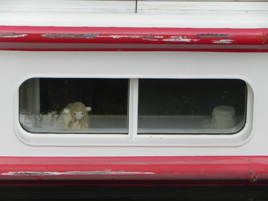 Stuffed sheep in the window of our ship's cabin
