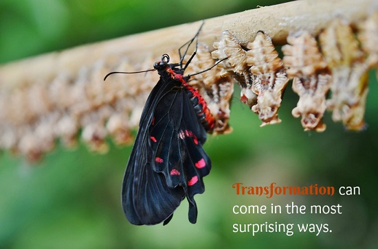 "Photo of butterfly, with the words ""Transformation can come in the most surprising ways"""