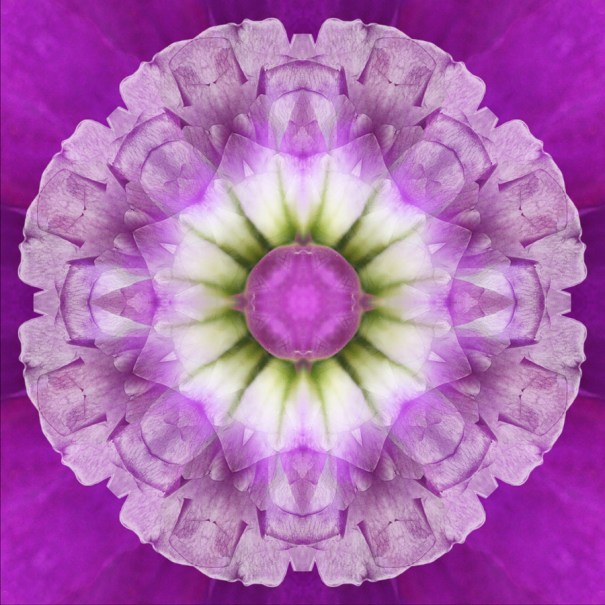mandala orchid flower photography Janet Towbin