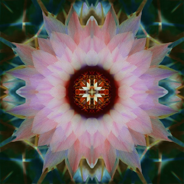 Vibrant Cactus Mandala by Janet Towbin