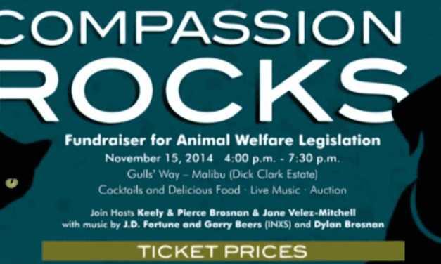 Compassion Rocks!