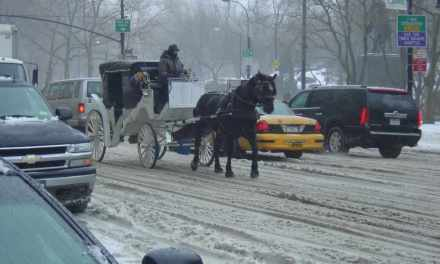 BILL TO BAN CARRIAGE HORSES IN NYC INTRODUCED… FINALLY!                                                                          WATCH ANNOUNCEMENT!