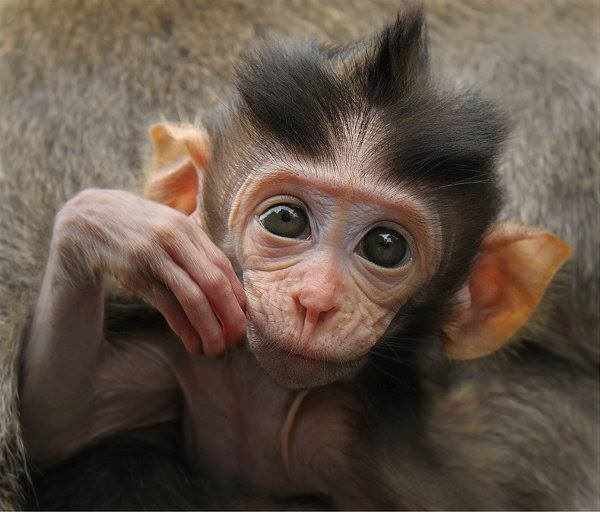 MILLIONAIRE BUYS ABOUT 1,400 MONKEYS TO SAVE THEM FROM BEING TORTURED IN LABS!