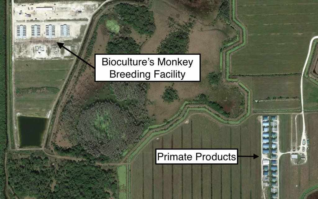 Monkeygate! Stunned Florida Residents Learn of Yet Another Secret Monkey Facility in Hendry County!